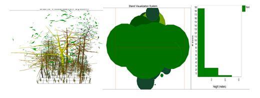 Perfiles vertical y horizontal y distribución por alturas del bosque